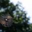 Spinnenweb in het zonlicht