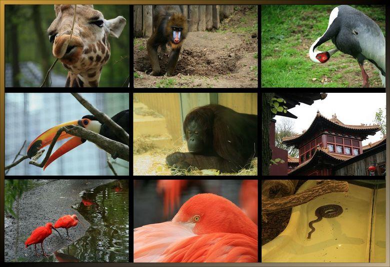 Dagje Ouwehands dierenpark Rhenen.