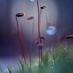 Moss lantern