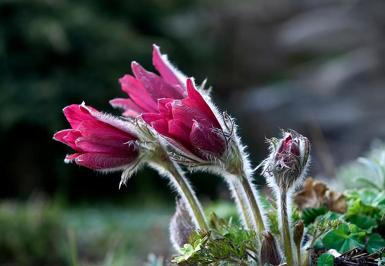 Bewerking: Pink  - N.a.v. een tip van Ina de bloemen wat meer ruinte gegund. Ik hoor graag de mening van anderen.