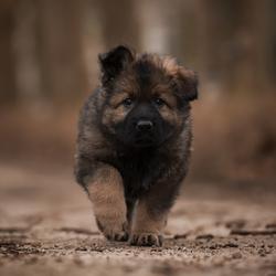 Puppy Ward
