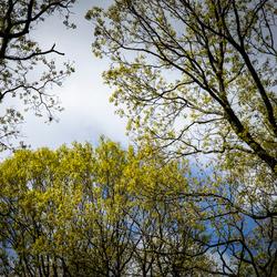 boomtoppen voorjaar