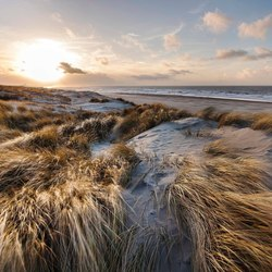 The Golden dunes