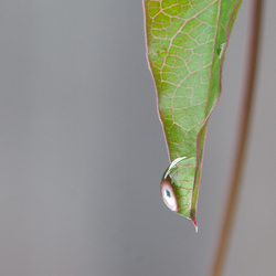 Macro druppel aan blad