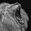 African white lion zw