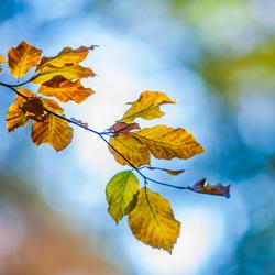 kleurrijke herfstblaadjes