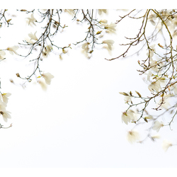 Magnolia in beweging