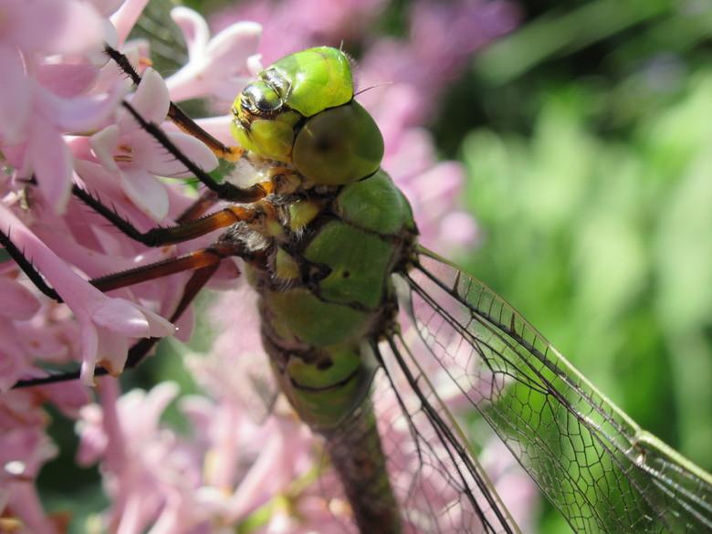IMG_0783 - Libelle die uitrust.