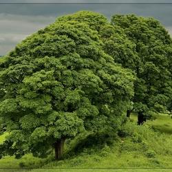 Bomen bij Old Sarum - Salisbury Engeland
