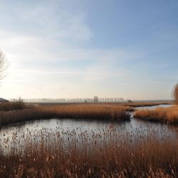 Natuurgebied nabij Aardenburg