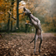 Jumping into Autumn