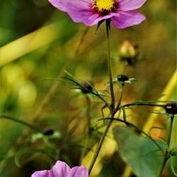 Flora op de wildakker