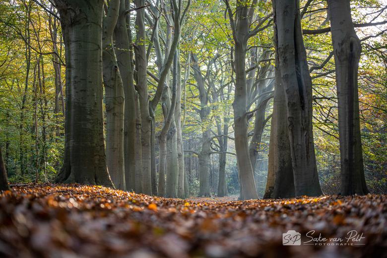 Rust en Vreugd - Dit laantje vonden we in Park Rust en Vreugd in Wassenaar. De omstandigheden bleken onverwacht perfect voor mooie zonnestralen op dit
