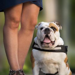 Donna de Bulldog