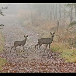 Reegeit met tweeling op bospad