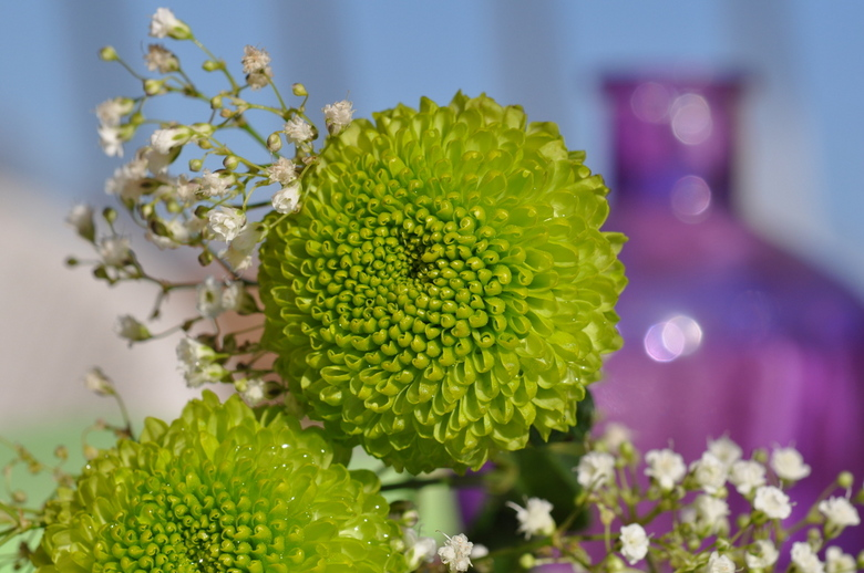 Flowerpower - Een simpele chrysant en wat gipskruid, geeft een lekker fris geheel.