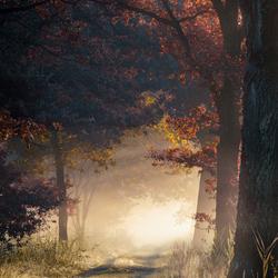 A fall mystery