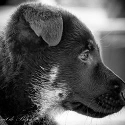 8_Hond