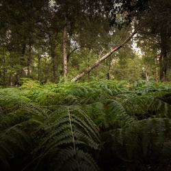 Jungle in eigen land