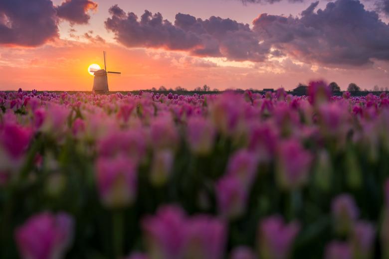 The Bucket Shot - Na ooit een foto in een bushokje te hebben gezien van tulpenvelden met een windmolen wist ik dat het mogelijk was. Daarna prijkte zo