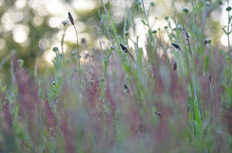 Bloemenveld -