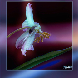 bloemenafval.............