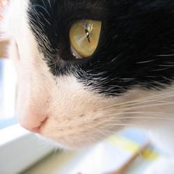 Eyes on the world