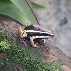 Frog as model