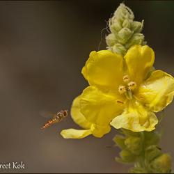Zonnig bloemetje