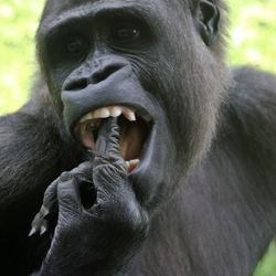 tandartsje nodig?