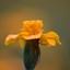 spinnetje op bloem