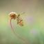 Kleine parelmoer vlinder