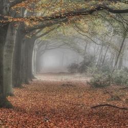 When fall meets fog...