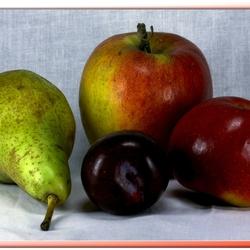 Fruit Gezond voor U