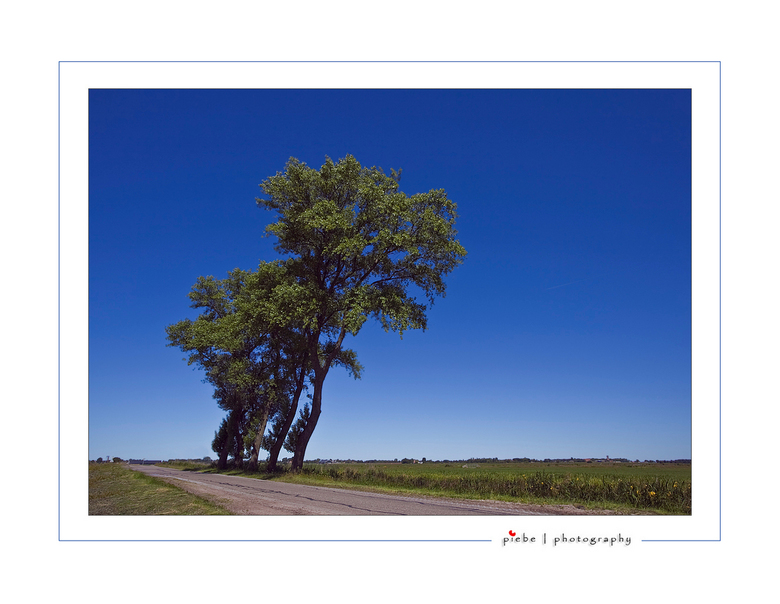 Hangende bomen - Deze foto heb ik gemaakt tijdens mijn fietstochtje door het zuiden van Friesland op 24 mei jl.<br /> De bomen hangen wat naar rechts