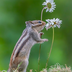 Squirrel love flowers.