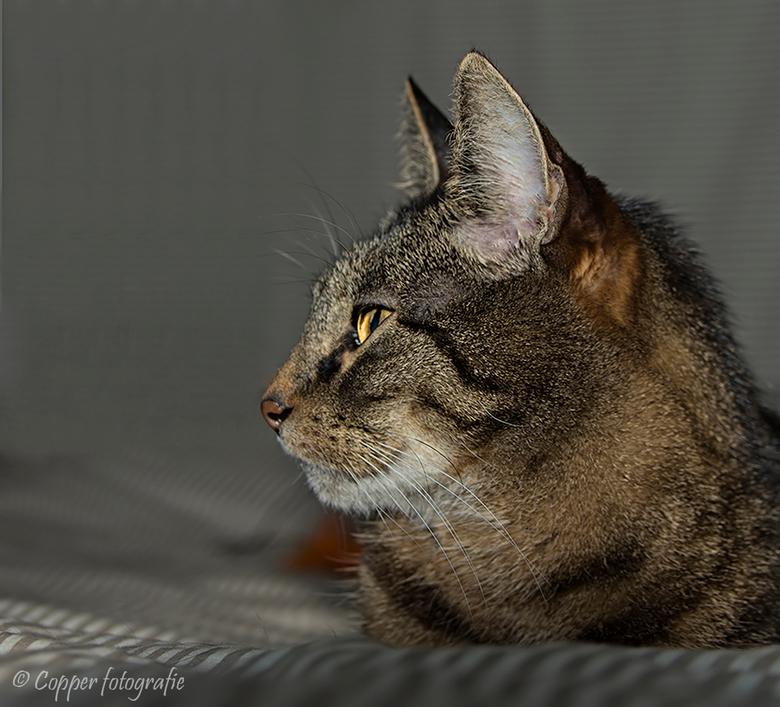 Mijn katje Riffeke († 15-02-2016)