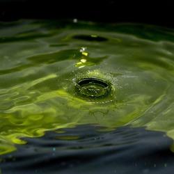 Waterkroon