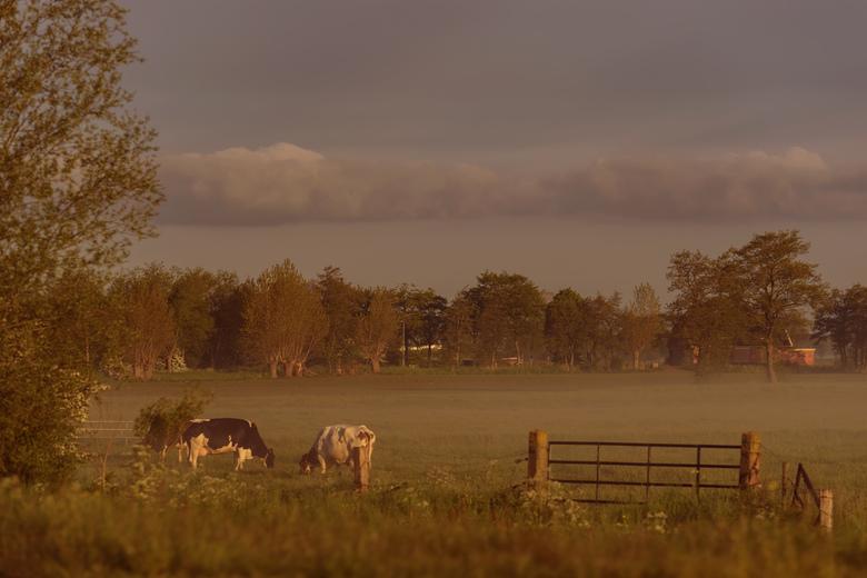 Early morning #2 - Vroeg op pad, net na zonsopkomst kwam de mist opzetten.