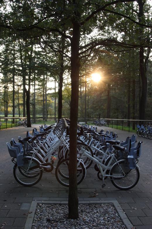 de witte fietsen - Einde van de dag in Nationaal Park De Hoge Veluwe.