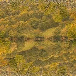 Meervoudige herfstkleuren