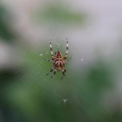 Zomaar een spinnetje.