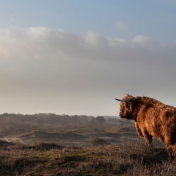 King of the Highland