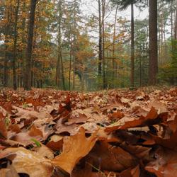 Een dik tapijt van bladeren!