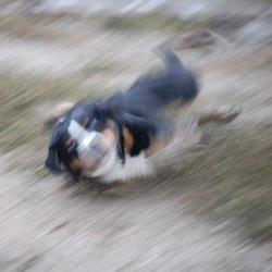 Hond maakt sliding