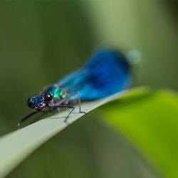 blue wonderguy