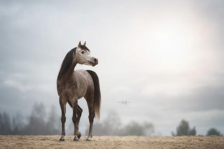 Nakiehs - Afgelopen weekend wat anders gefotografeerd dan een hond, maar ook dit vind ik super om te doen... hoop dat ik dit jaar meerdere paarden voo
