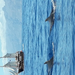 Kleine walvissen