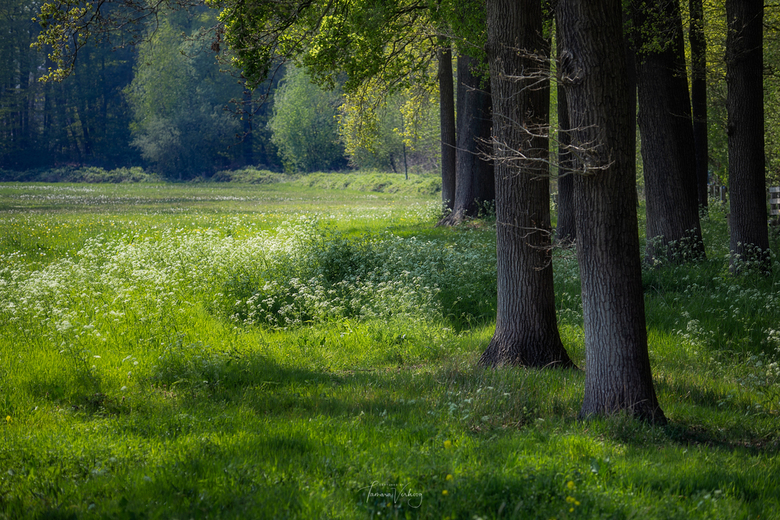 Green is the colour of spring -