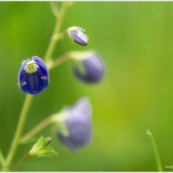 Mooi blauw 1